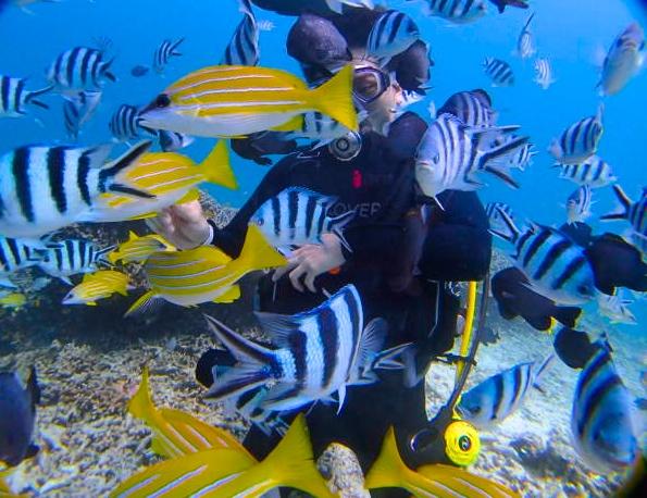 色とりどりの熱帯魚とダイビング