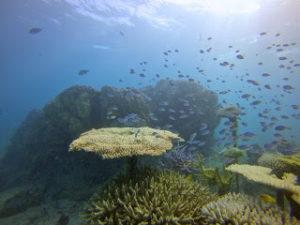 魚の群れ大発見