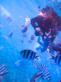 かわいい魚たちに囲まれて