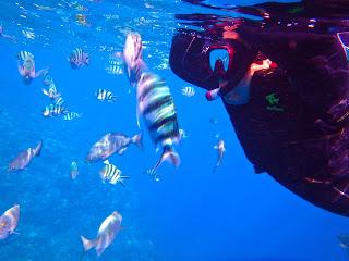 無料餌付け体験では、水面まで魚たちが集まってきてくれます!!